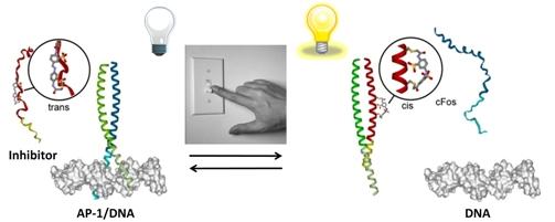 Abbildung: Lichtgesteuerte Proteine